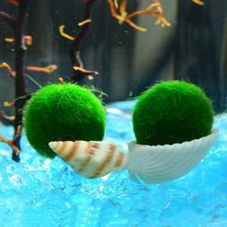 2-5cm Giant Algae Moss Ball Cladophora Aquarium Live Plant F