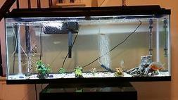3 fish tanks and 2 piranhas