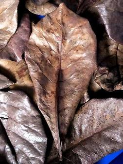"300g. 6""-9"" Grade A of Indian Almond Leaf Washed & Sun Dried"