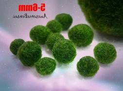 6 Marimo Moss Balls Cladophora live aquarium plant fish tank