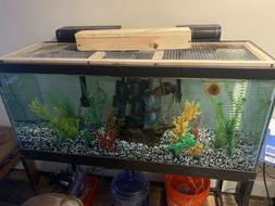 75 gallon fish tank 2 Filters Air Pump 2 5In Oscars And Heat