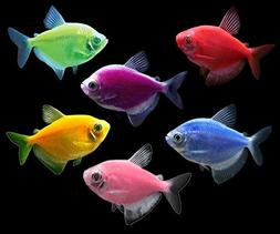 GloFish Tetra Basic Collection