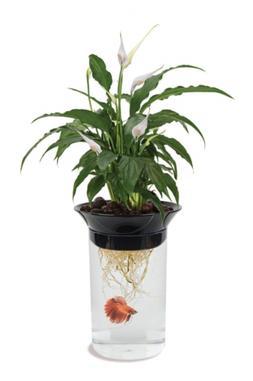 aquaponic betta fish tank promotes healthy environment