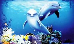 Aquarium 3D HD Aquarium Background Dolphin Penn Plax for Fis
