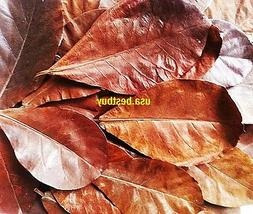 Best Mix Size Ketapang Catappa Indian Almond Leaf 10+2 Water