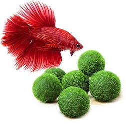 Luffy Betta Balls : Live Round-Shaped Marimo Plant : Natural