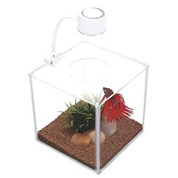 cubus glass betta kit new free ship