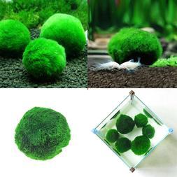 Household Green Ball Plant <font><b>Fish</b></font> <font><b