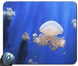 jellyfishes Aquarium Blue Aquarium of Genoa Italy 14378 Mous