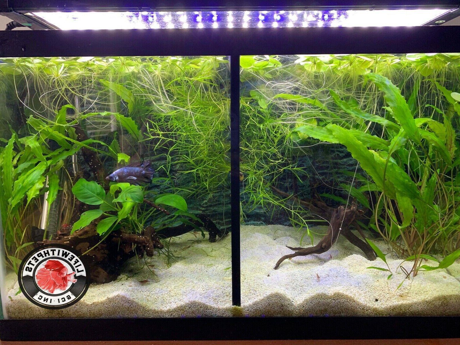 Lifewithpets Fish Tank Divider.