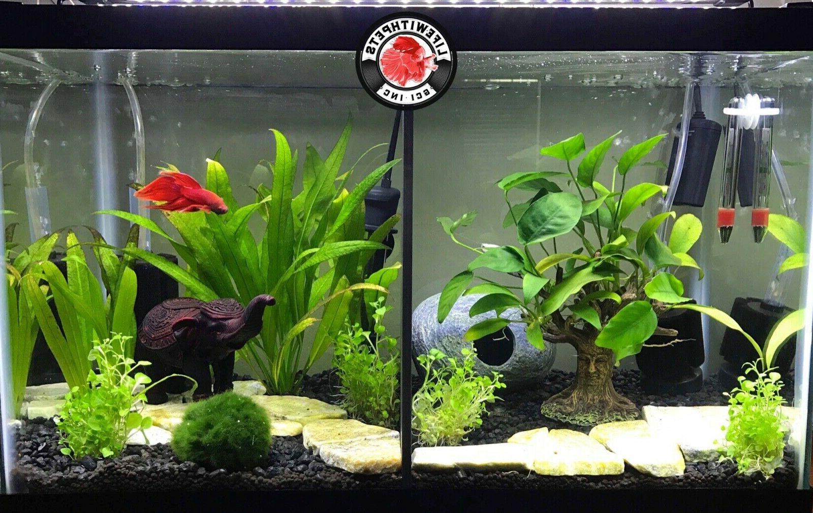 10 Solid Top Fin Tanks and Others
