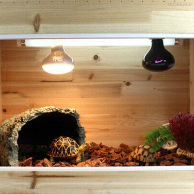 6382 Scorpion Aquarium Rest
