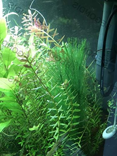 BEGONDIS Fish Artificial Green Water Plants Silk Plastic, Non-Toxic & Safe for Fish