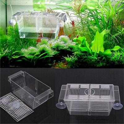 aquarium fish tank guppy breeding breeder fish