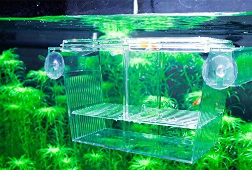PETS Fishes Breeding Boxes Hatching