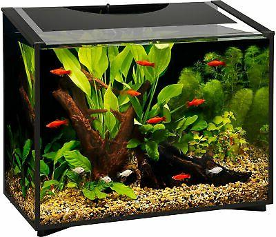 Aqueon Ascent LED Frameless Aquarium Kit 20 Gallon