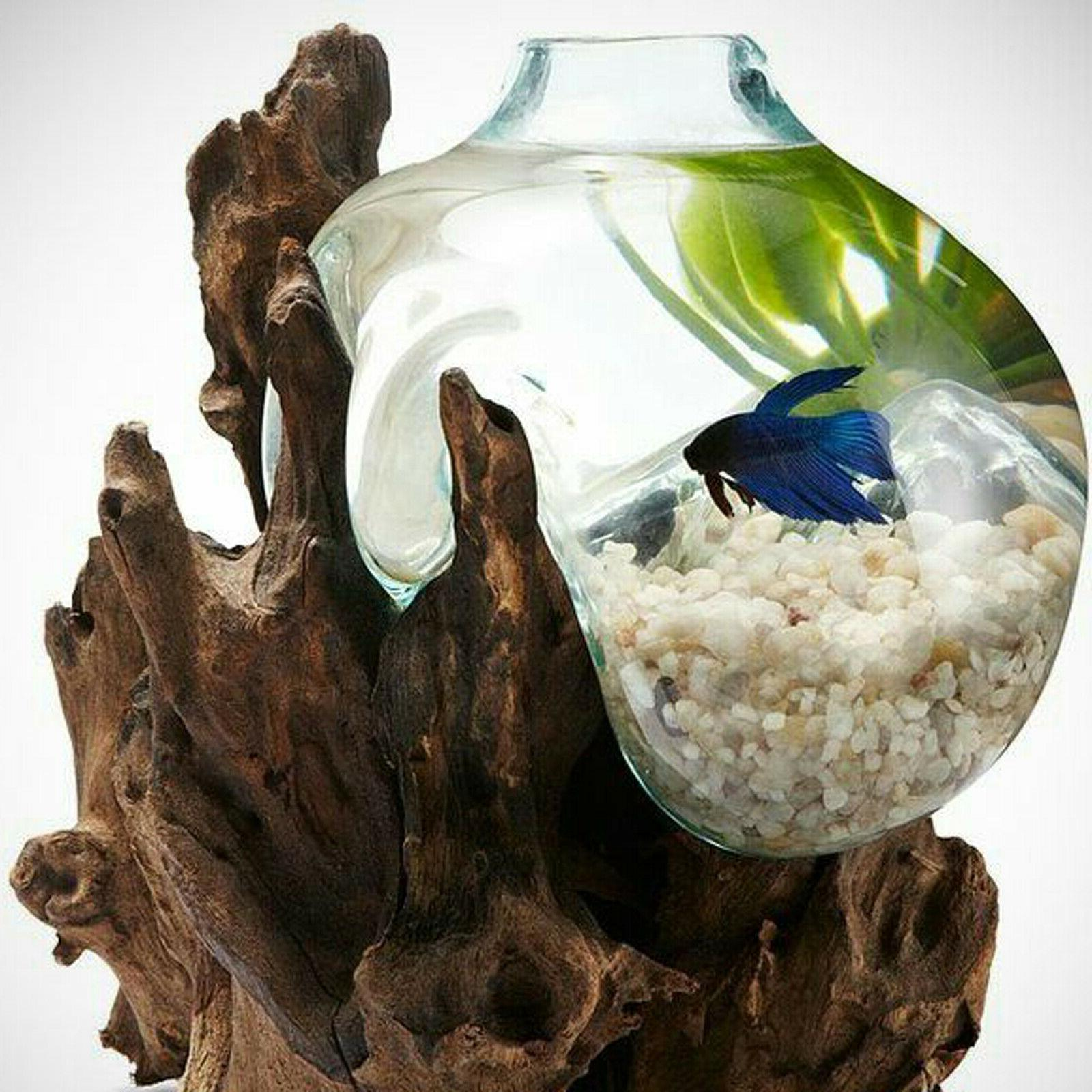 Betta Molten Glass on Driftwood M124 Free Shipping