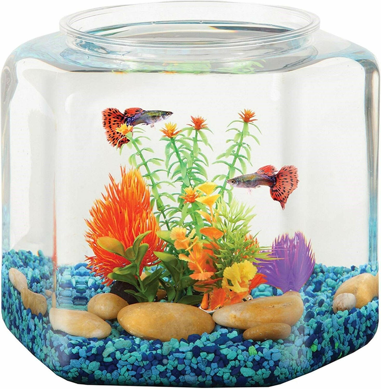 Koller 2 Hex Fish Office