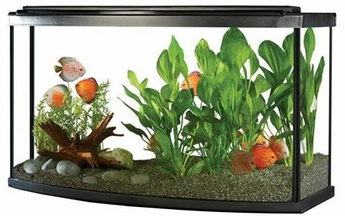 bow front aquarium kit w