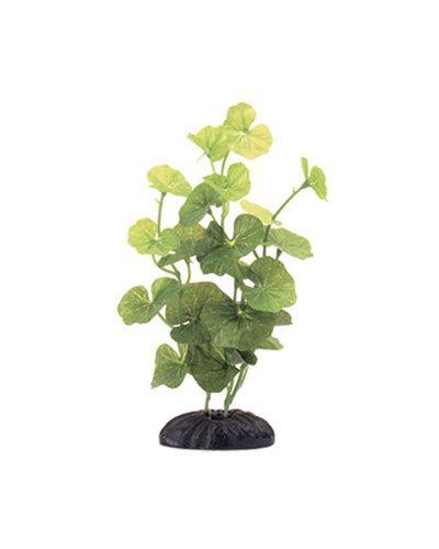 ecoscaper hydrocotyle silk plant