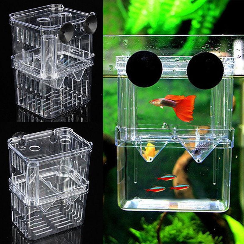 fish breeding aquarium box tank isolation incubator