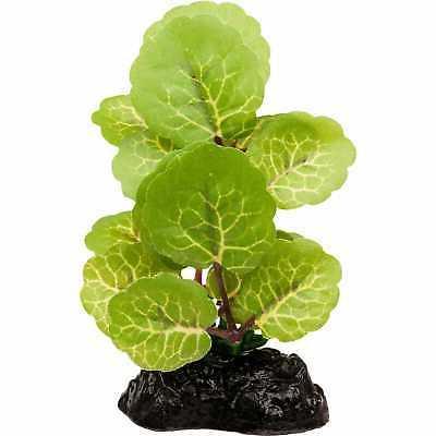 inline betta aquarium plant