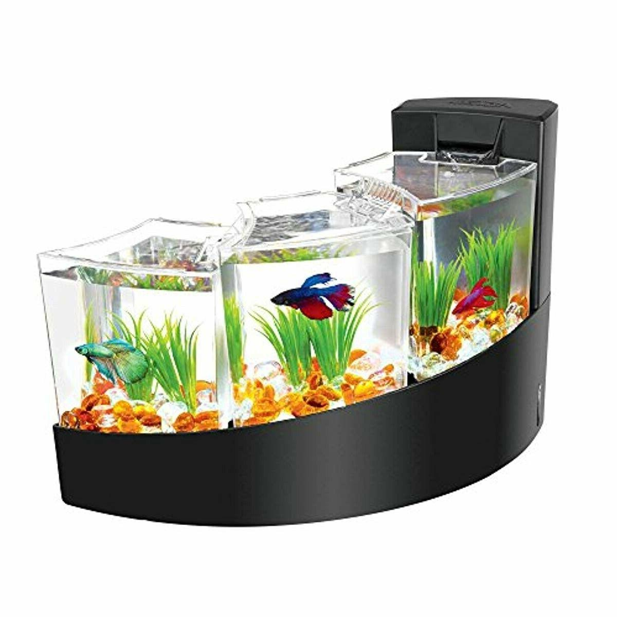AQUEON BETTA BLACK SHIPPING