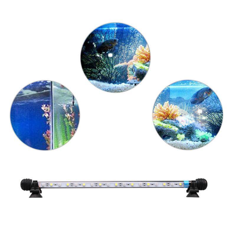 LED Aquarium Fish Underwater