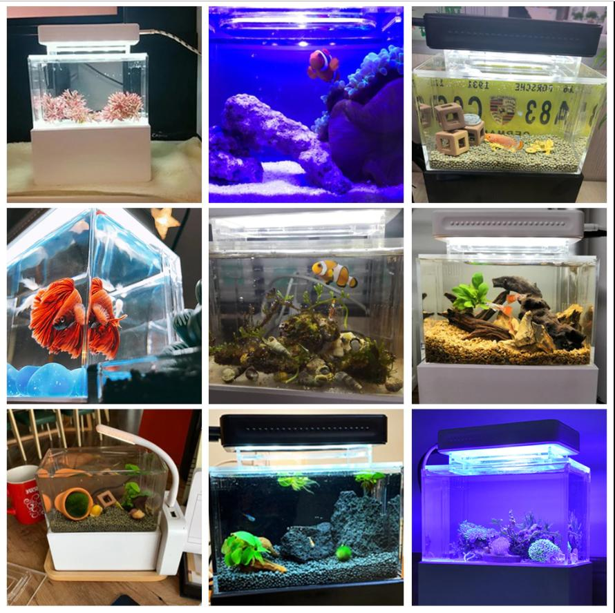 Aquarium Fish Tank with Water