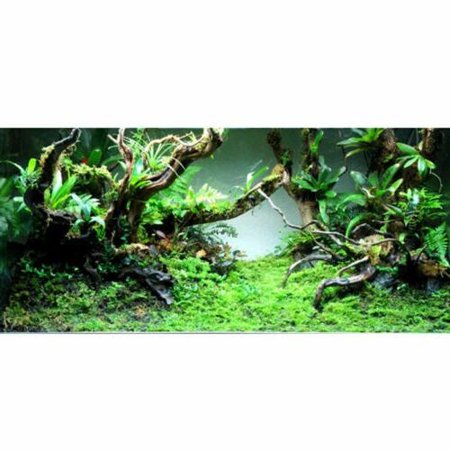 Natural Trunk Aquarium US