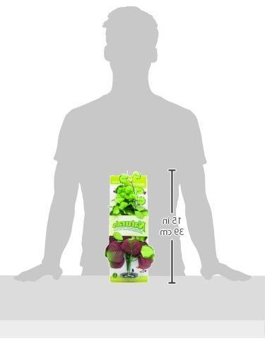 Plant,