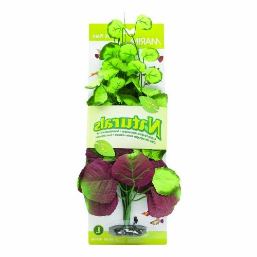 pennywort silk plant