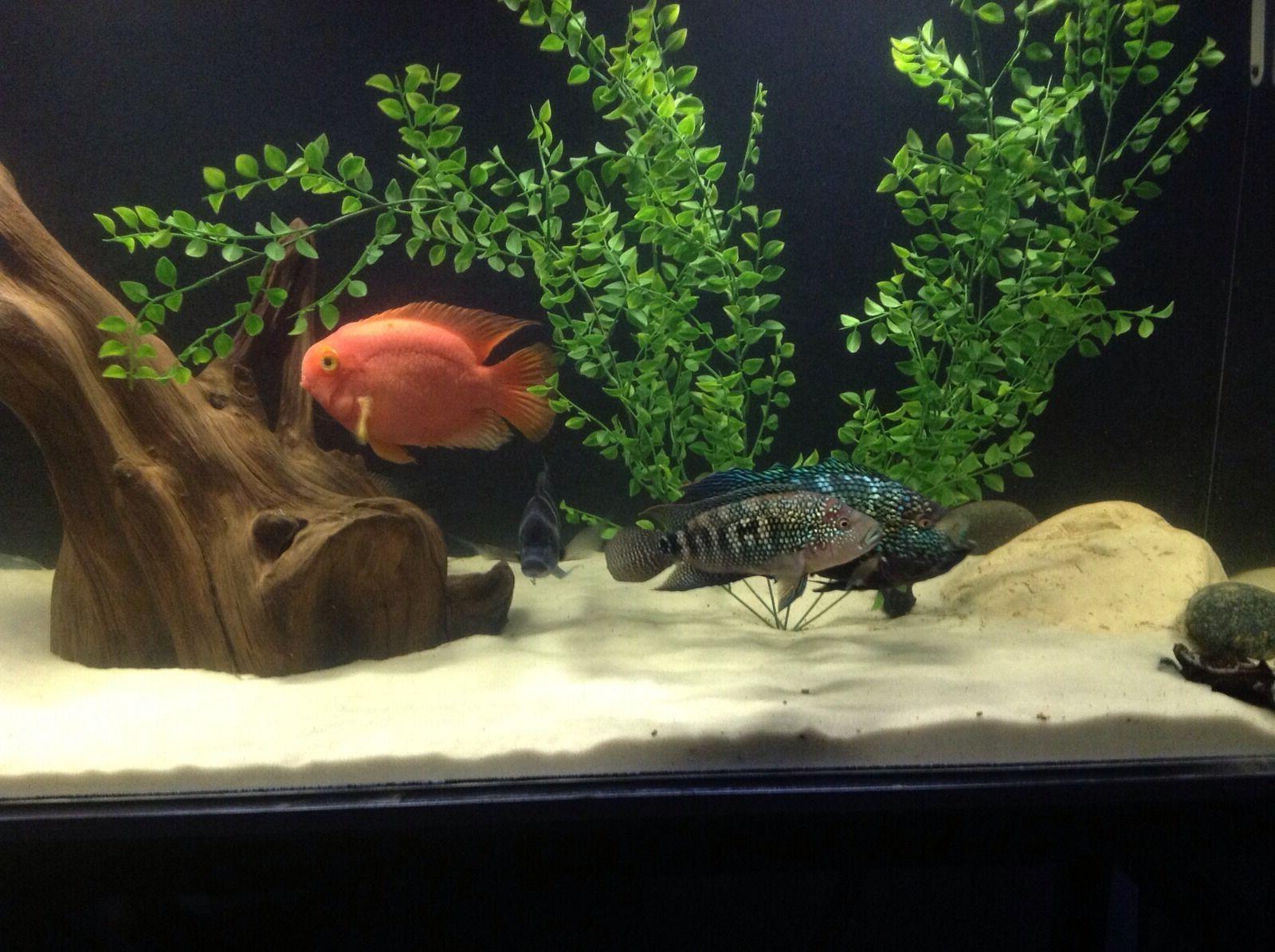 FISH TANK SAND DISCUS SEVERUM'S WHITE LB'S