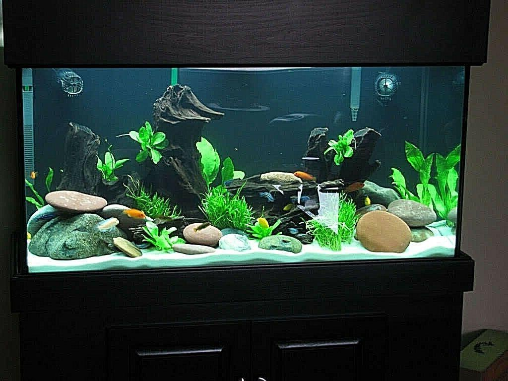 WHITE FISH TANK AQUARIUM SAND PLECOSTOMUS SEVERUM'S 42