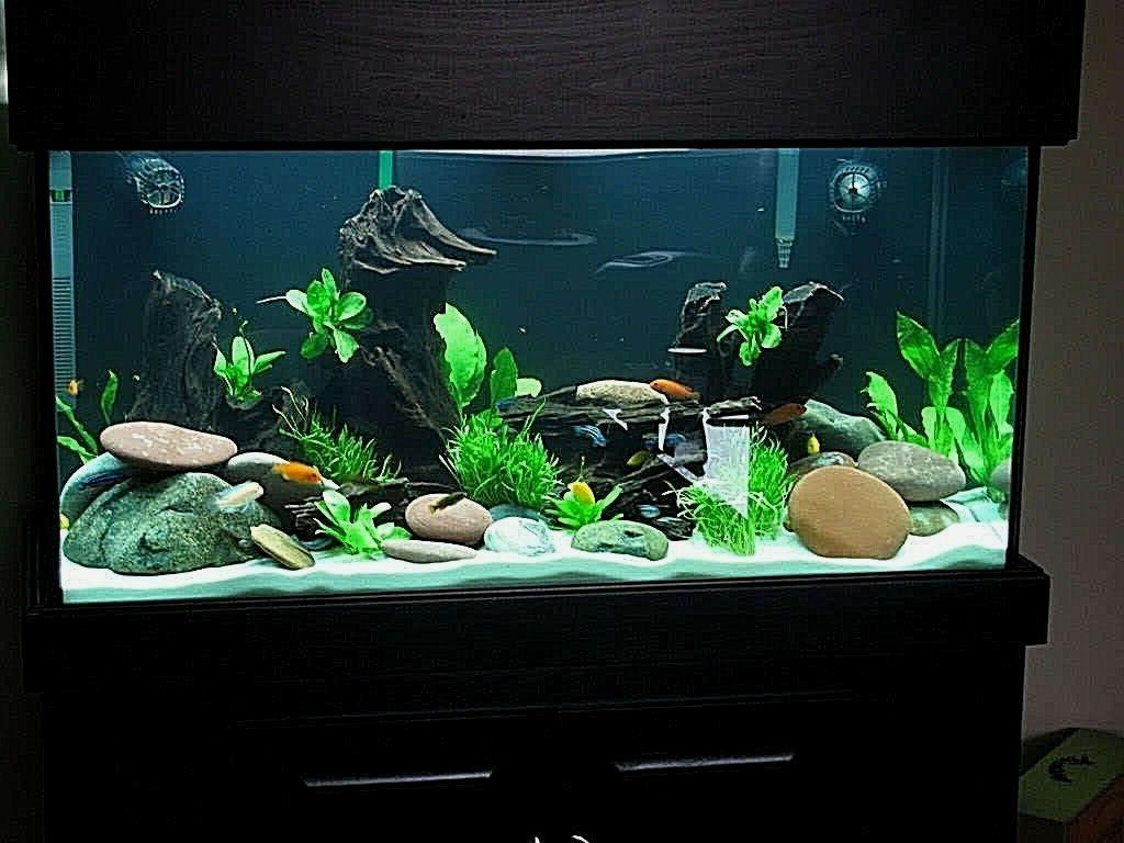 WHITE SAND CICHLID TANK CRAFTS 8