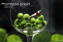 Moss Ball-fish tank co2 live fern aquarium java plant O