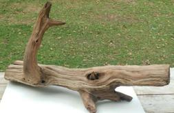 Natural Freshwater Driftwood XL Cedar Tree Stump Taxidermy R