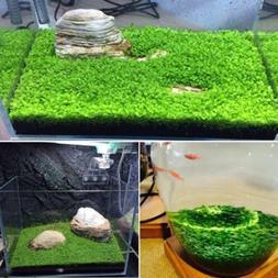 Plant Seeds Fish Tank Aquarium Aquatic Water Grass Decor Gar