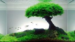 Xmas Moss-Live Aquarium Plant Java Fish Tank Fern Aquatic Se